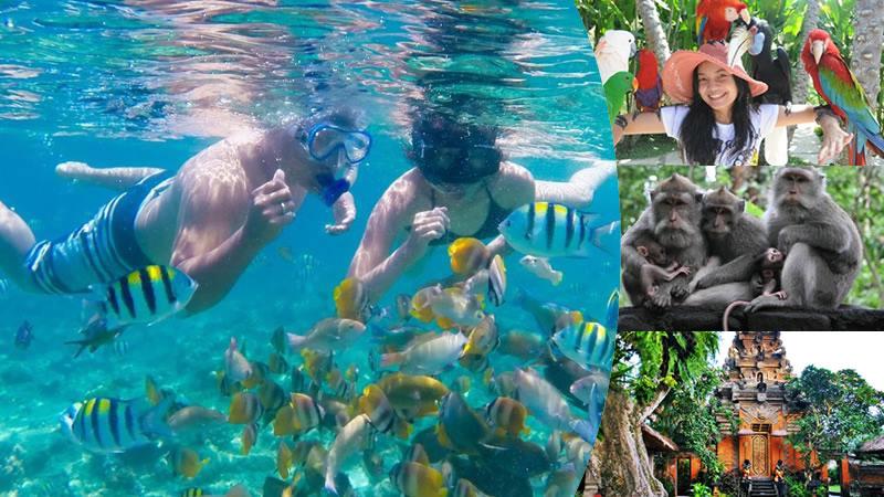 snorkeling tanjung benoa + bali bird park + ubud tour