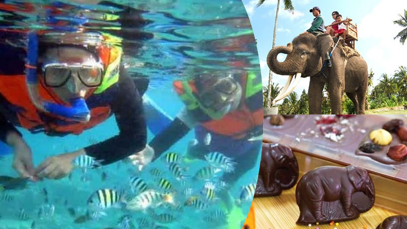 snorkeling tanjung benoa bali + elephant ride