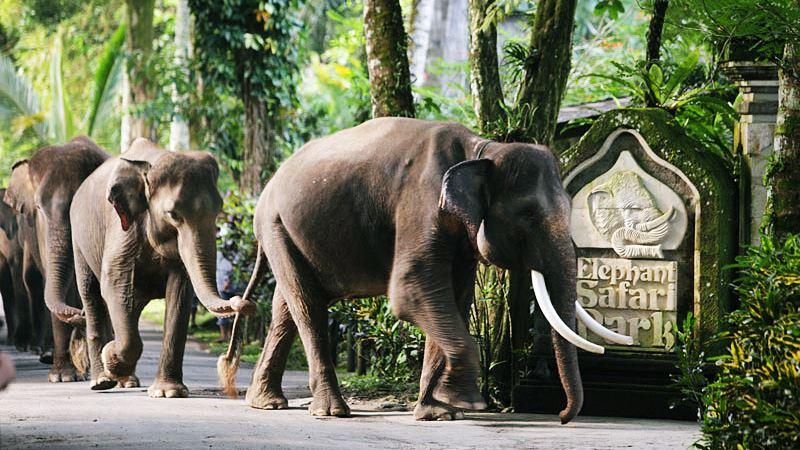 elephant safari park taro 1